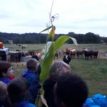 Taverham Beavers down on the farm